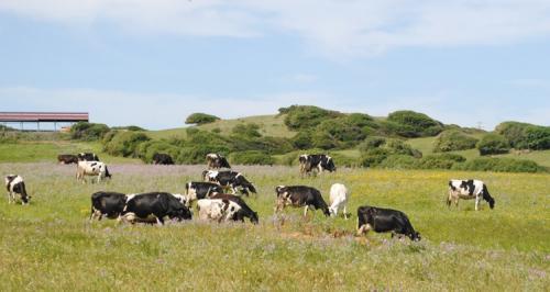 prado con ganado
